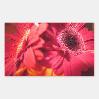 Beautiful Gerberas closeup