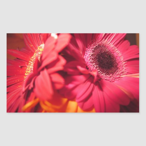 Beautiful Gerberas closeup Rectangular Sticker
