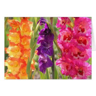 Beautiful Gladiolus Blooms Card