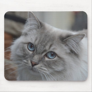 Beautiful Gray Cat with Blue Eyes Mouse Pad