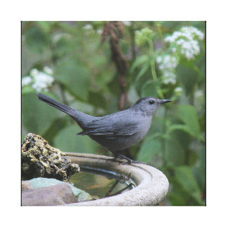 Beautiful Gray Catbird Wrapped Panel Canvas Print