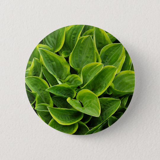 Beautiful green hosta plant 2 inch round button