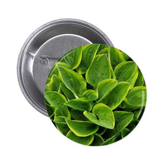 Beautiful green hosta plant 2 inch round button