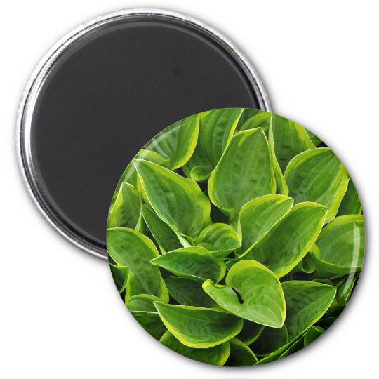 Beautiful green hosta plant 2 inch round magnet