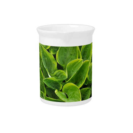 Beautiful green hosta plant beverage pitchers