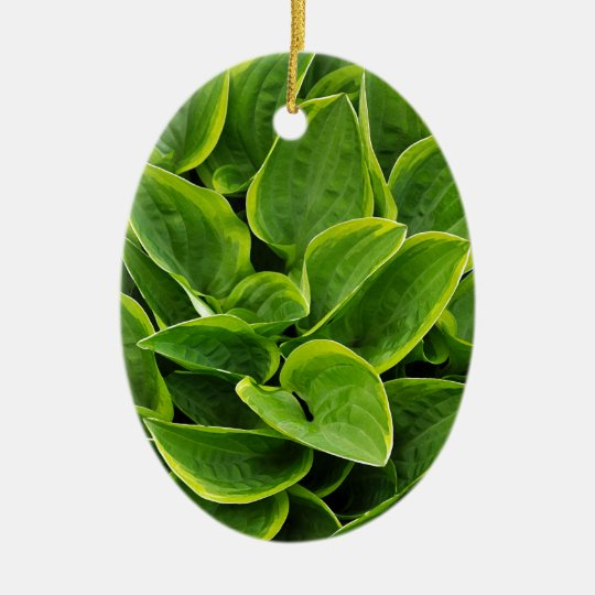 Beautiful green hosta plant ceramic oval ornament