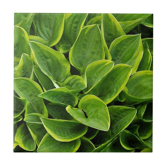 Beautiful green hosta plant ceramic tile