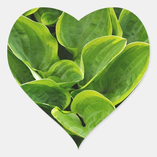 Beautiful green hosta plant heart sticker