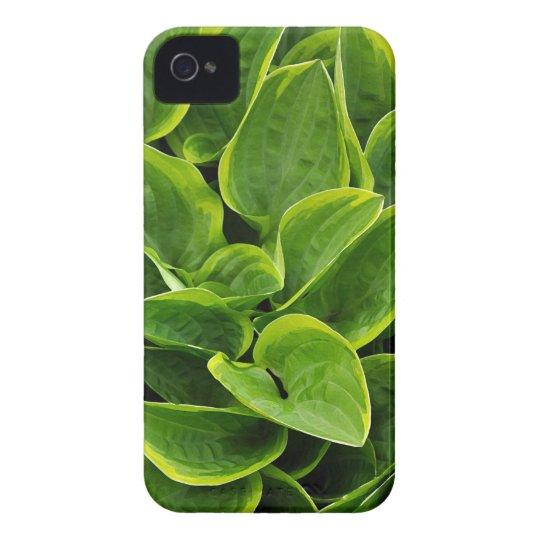 Beautiful green hosta plant iPhone 4 covers