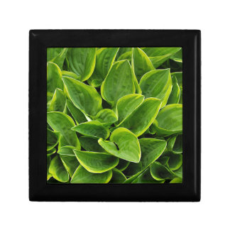 Beautiful green hosta plant jewelry boxes