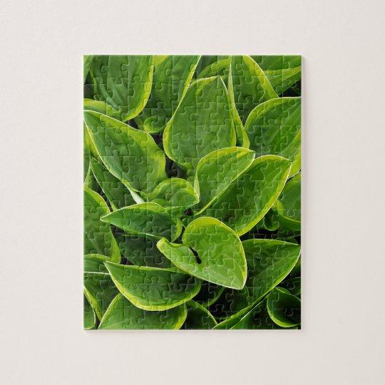 Beautiful green hosta plant jigsaw puzzle