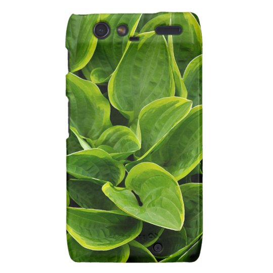 Beautiful green hosta plant motorola droid RAZR covers