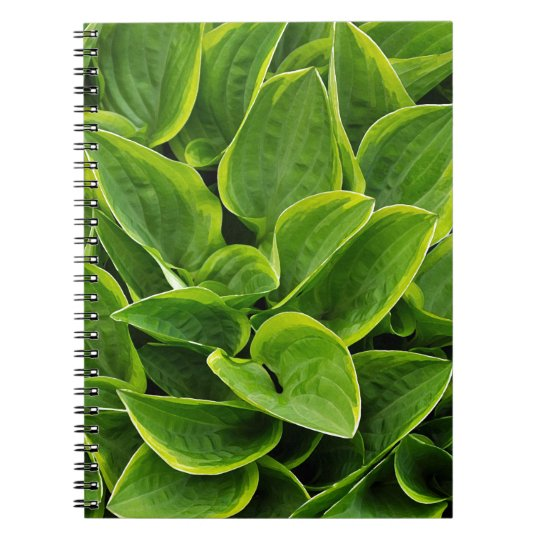 Beautiful green hosta plant notebooks