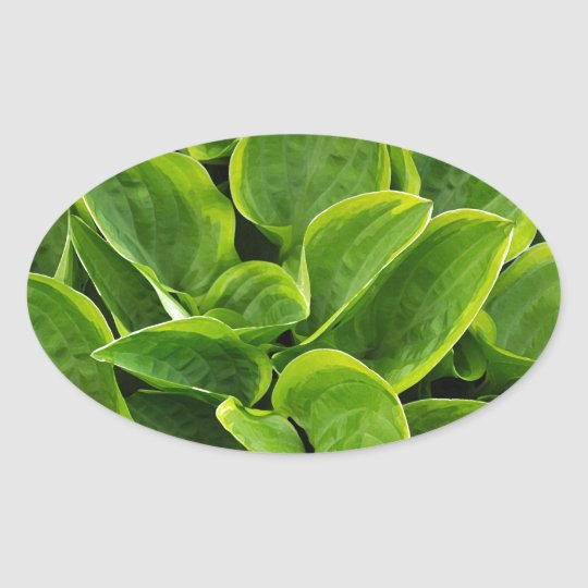 Beautiful green hosta plant oval sticker