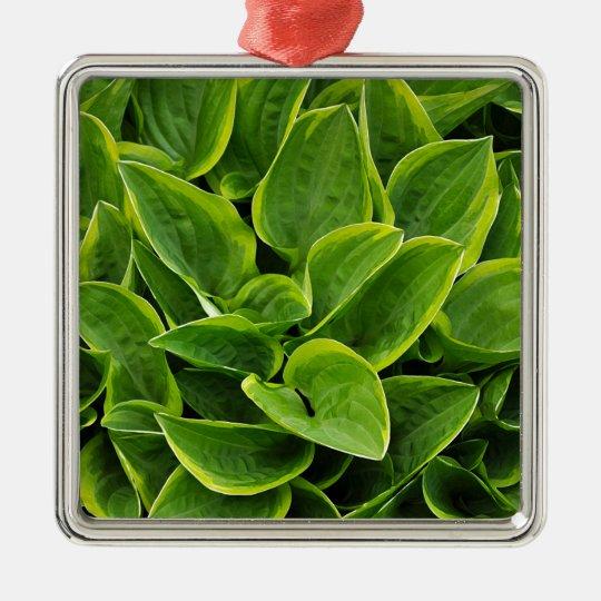 Beautiful green hosta plant Silver-Colored square ornament