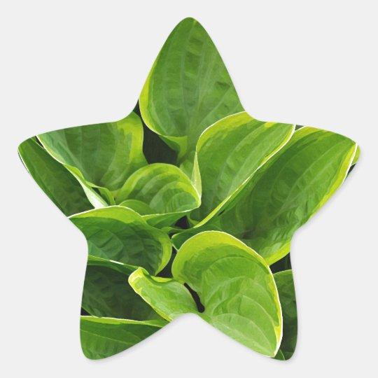 Beautiful green hosta plant star sticker