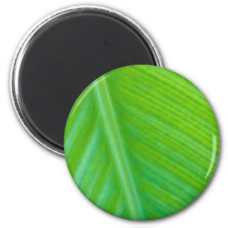 Beautiful Green Leaf Macro Photo Refrigerator Magnet