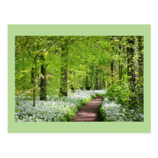 Beautiful Green Springtime Forest Postcard