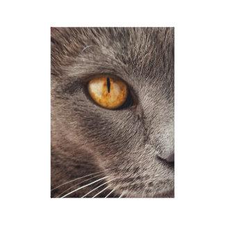 Beautiful Grey Cat Face Canvas Print