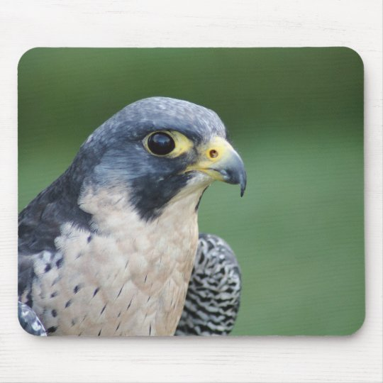 Beautiful grey-white Pelegrine Falcon Mouse Pad