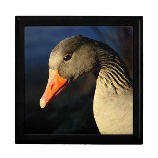 Beautiful greylag goose gift box
