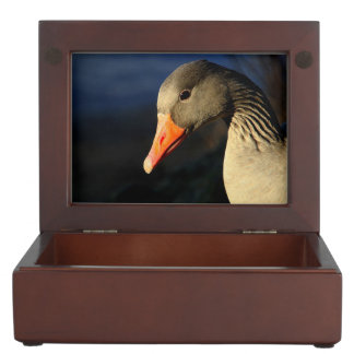 Beautiful greylag goose keepsake box