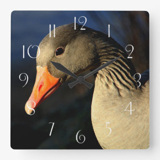 Beautiful greylag goose square wall clock