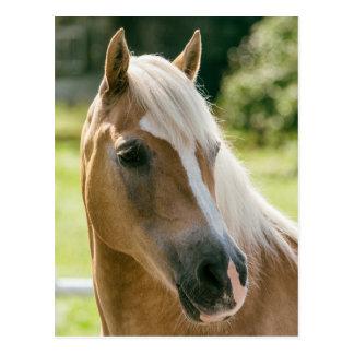Beautiful haflinger horse portrait postcard