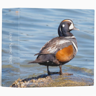 Beautiful Harlequin Duck on the Rock 3 Ring Binder