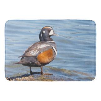 Beautiful Harlequin Duck on the Rock Bath Mat