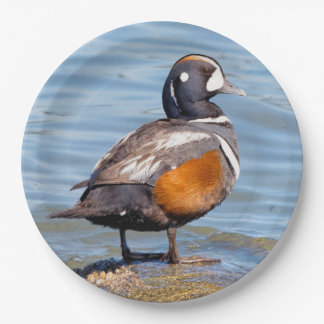 Beautiful Harlequin Duck on the Rock Paper Plate