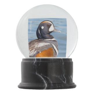 Beautiful Harlequin Duck on the Rock Snow Globe