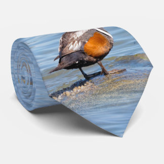 Beautiful Harlequin Duck on the Rock Tie