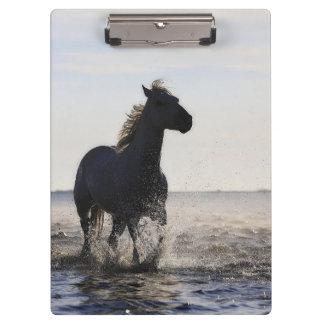 Beautiful Horse Clipboard