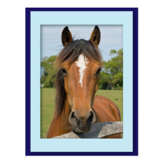 Beautiful horse head chestnut photo postcard
