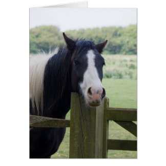 Beautiful Horse head close-up greeting card