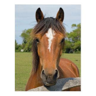 Beautiful horse head in field photo postcard