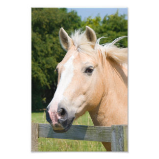 Beautiful horse head palamino portrait photo