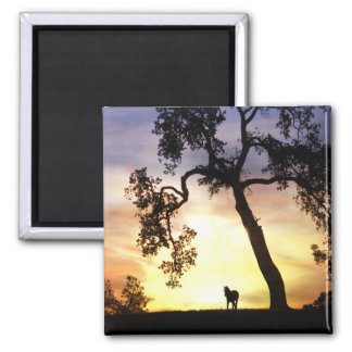 Beautiful Horse in the Sunset Magnet