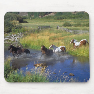 Beautiful Horse Ranch Destiny Nature Mouse Pad