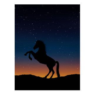 BEAUTIFUL HORSE STALLION POSTCARD
