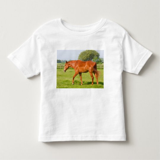 Beautiful horse toddlers, kids t-shirt, gift idea toddler t-shirt