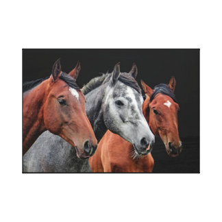 BEAUTIFUL HORSES PORTRAIT FOR HORSE LOVERS CANVAS PRINT