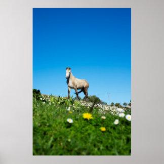 beautiful irish horse in a field poster