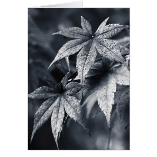 Beautiful Japanese Maple Leaf Portrait Card