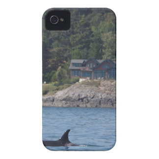 Beautiful Killer Whale Orca in Washington State iPhone 4 Case-Mate Cases