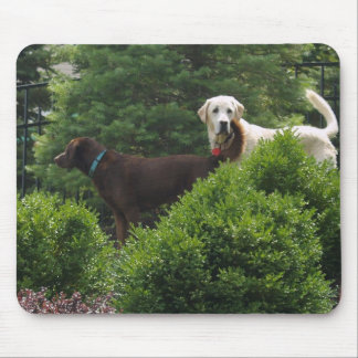 Beautiful Labrador mouse pad
