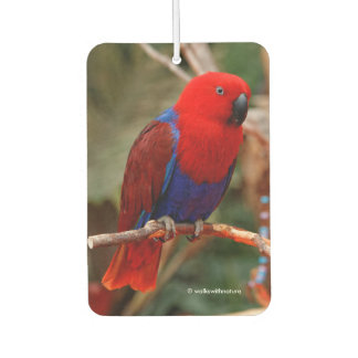 "Beautiful ""Lady in Red"" Eclectus Parrot Air Freshener"
