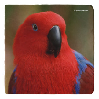 """Beautiful """"Lady in Red"""" Eclectus Parrot Trivet"""