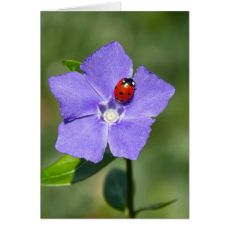 Beautiful Ladybug on Periwinkle Greeting Card